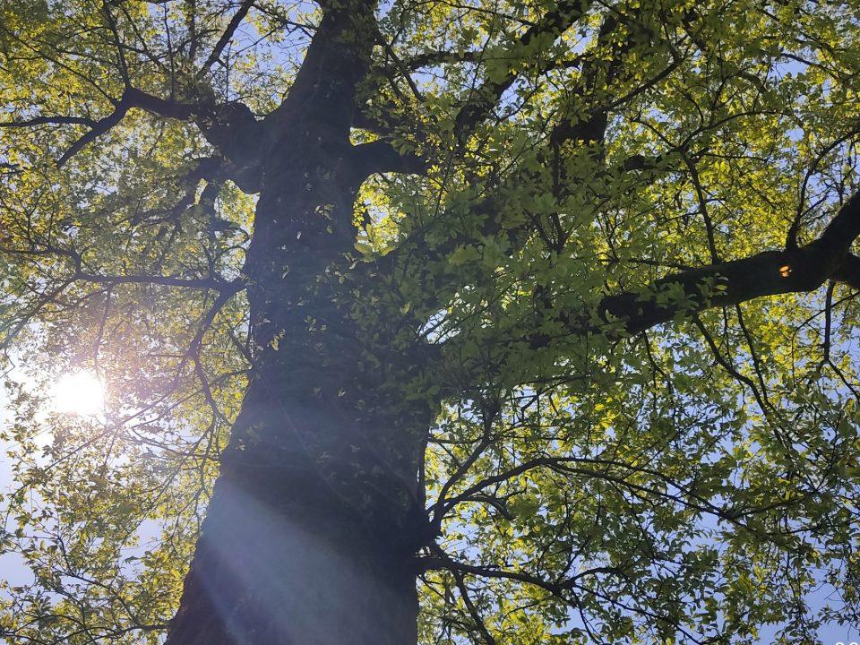 جنگل لیشک سیاهکل